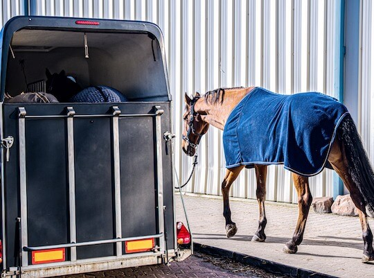 Horse being loaded into a trailer for transportation
